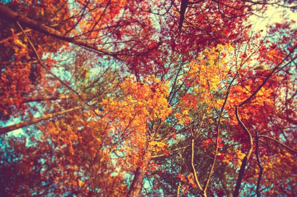 autumnforblog